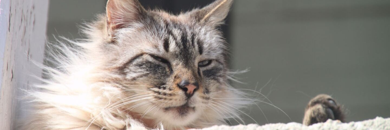 Chanson pour calmer les chats header