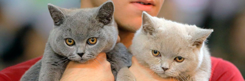 deux chats portés en main