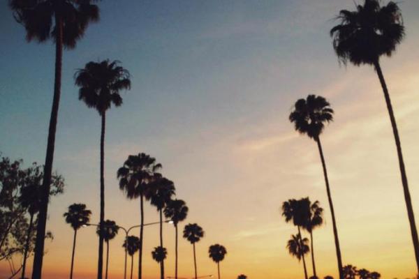 été, palmier