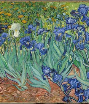 Les Iris de Van Gogh