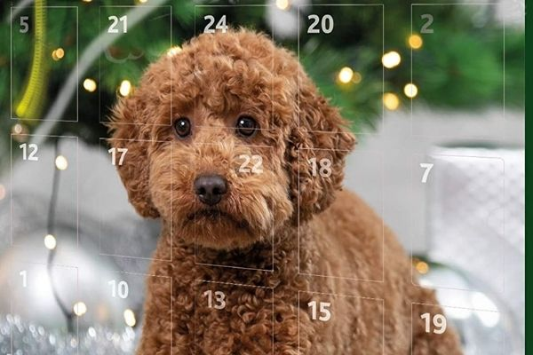 calendrier avent animaux