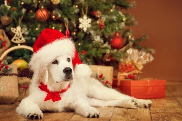 Chien chapeau Père Noël
