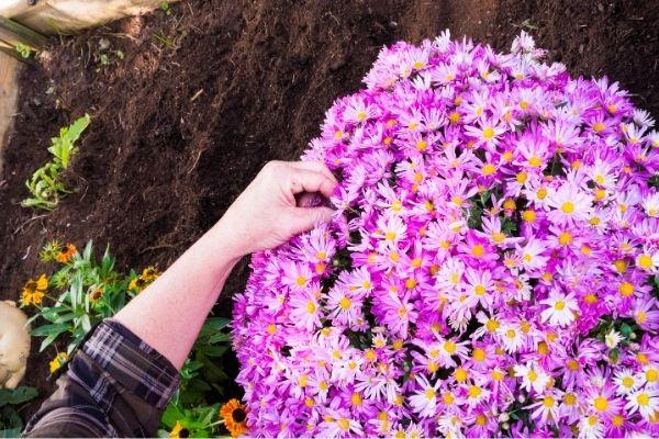 fleurir tombe