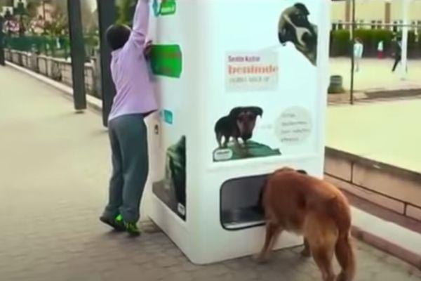 Distributeur de croquettes pour chiens
