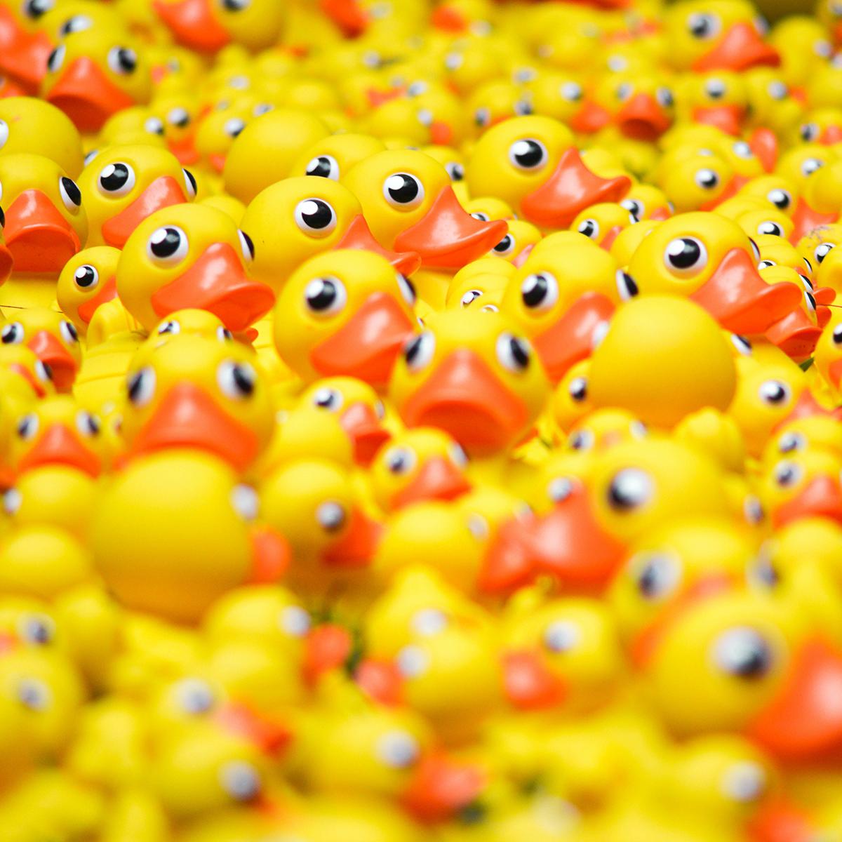 Canards en plastique