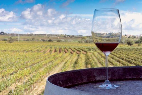 Vin vignoble