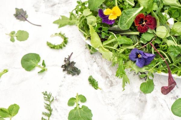 Jardin comestible et médecinal