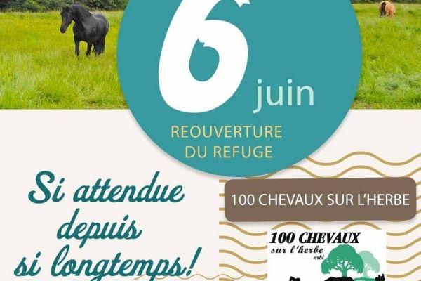 100 chevaux vignette