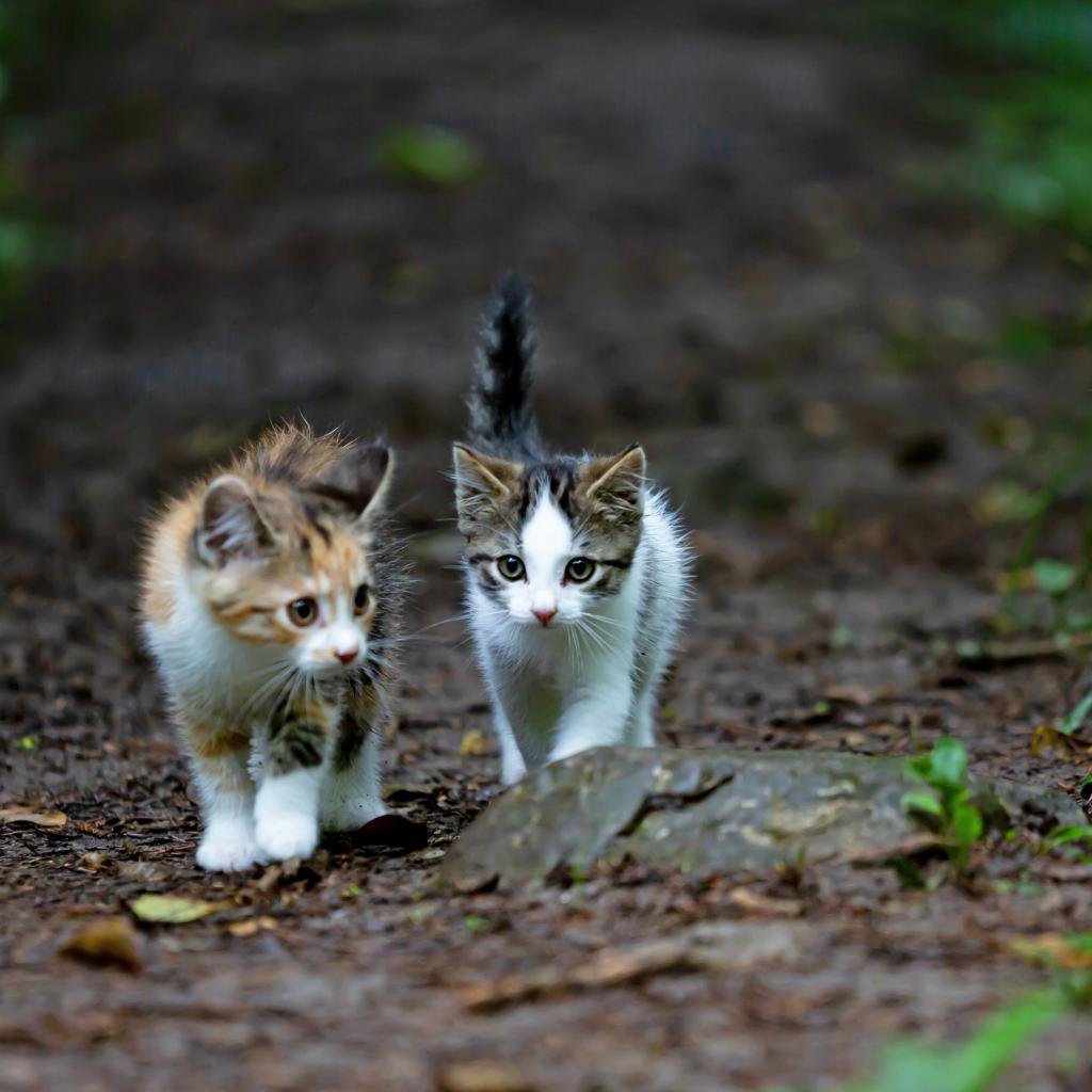 Chats dans la rue
