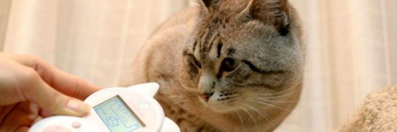 traducteur pour chat