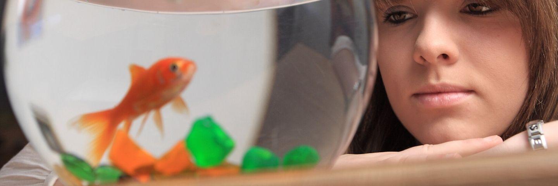 une femme regarde un poisson rouge dans un bocal